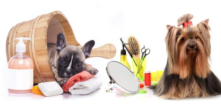19€ από 45€ (-58%) για ένα πλήρη Καλλωπισμό & Περιποίηση του Σκύλου σας που περιλαμβάνει μπάνιο, κούρεμα (και με ψαλίδι), χτένισμα, Spa, ξεκόμπιασμα, καθαρισμό αδένων, κόψιμο νυχιών και αφαίρεση νεκρής τρίχας, χωρίς καμία νάρκωση, στο DogsKingdom στην Κυψέλη εικόνα